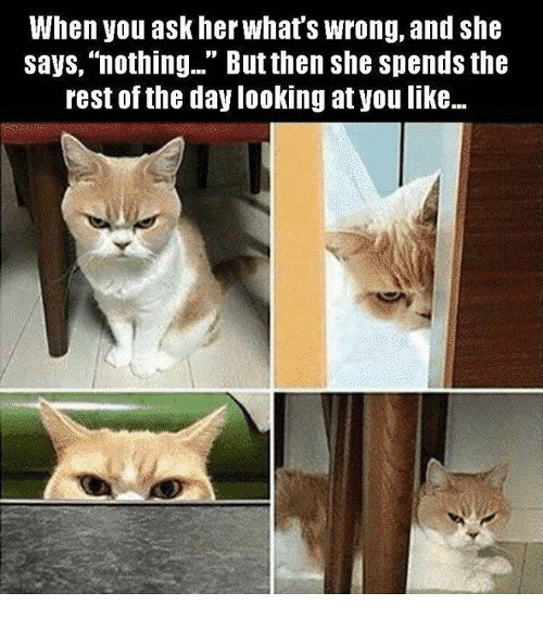 Protecting seniors from financial abuse funny meme angry cat showing emotions upset