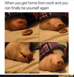 When you get home from work and when you have financial protection be yourself again funny meme pig cookie blanket relax