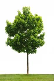 Manage your financial security like a strong shade tree.